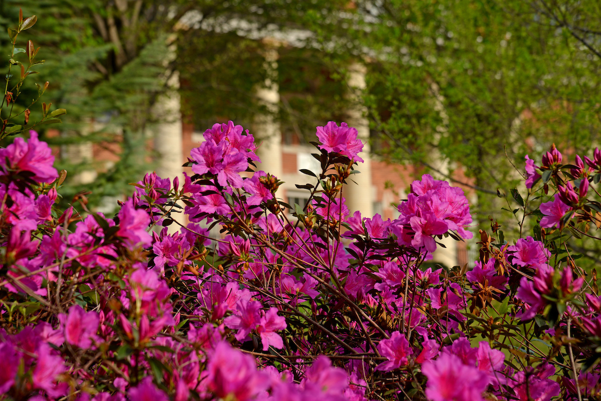 Flowers in bloom alongside the Court of North Carolina.